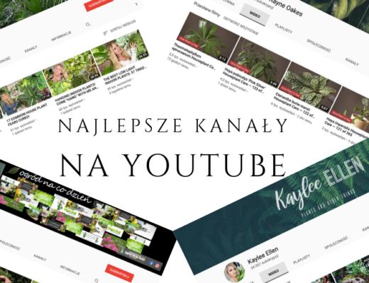 filmy na youtube o roślinach kwiatach