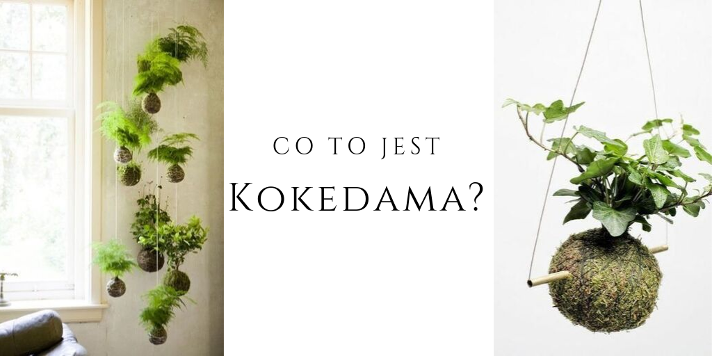 kokedama co to jest